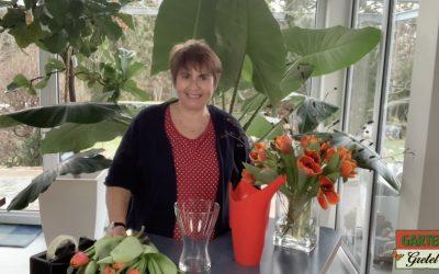Der Tipp für Tulpen!